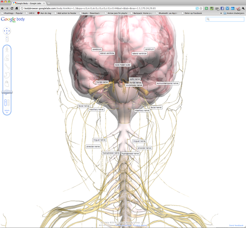 3d model of the human body