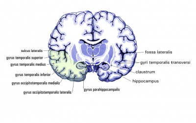 parahippocampal place area