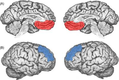 prefrontal cortex