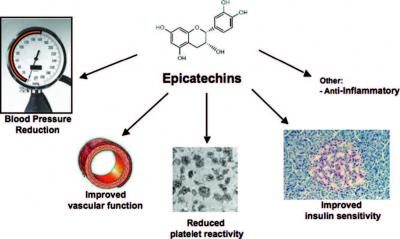 health-relevant-effect-of-epicatechins