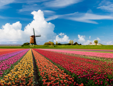 Dutch Grand Round