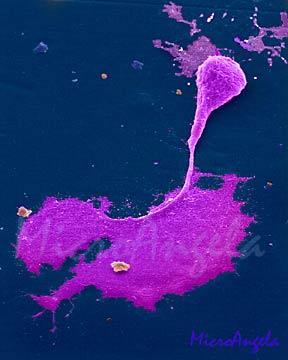 neuron electron microscope image